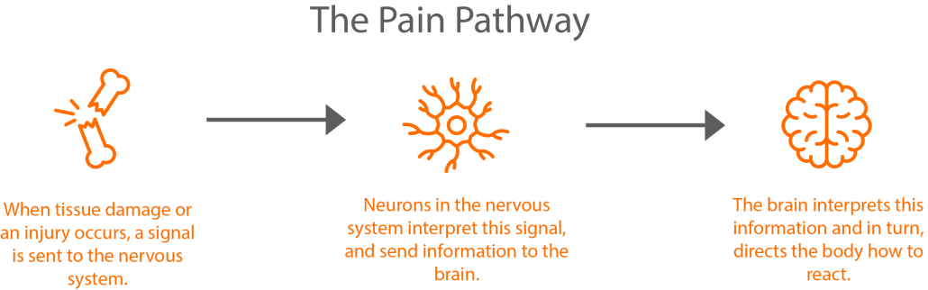 Graphical representation of the pain pathway